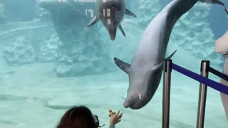 Dolphins Fascinated By Fidget Spinner