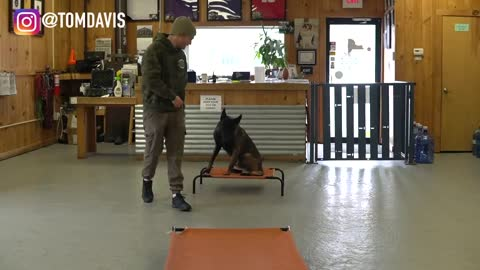 The easiest dog training process to teach your dog to go to their bed ON COMMAND