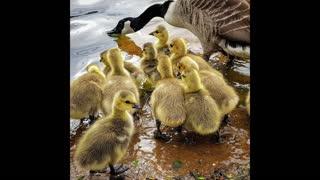 ' Still '.. Quackers 🦆🦢🐥