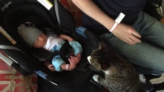Cats meet Babies for the first time :-) CUTE !