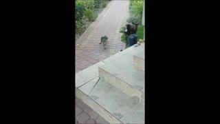 Cat having fun with dog.