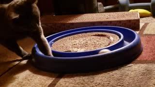 Kitty cat at play