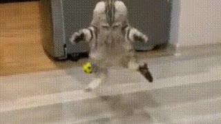 funny cat ??