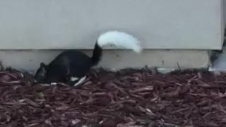 Black and Whit Squirrel