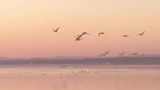 Sunset and Canadian Geese Migration begins
