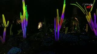 Mind-blowing electric desert botanical garden in Arizona