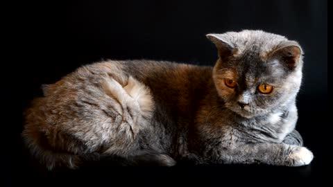 Quiet and beautiful cat