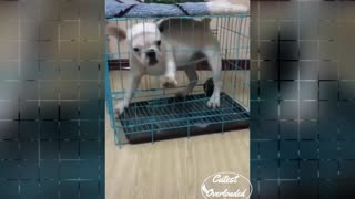 DOG CAGE Dog try to open Cage cute and funny dog   Cutest Overloaded  