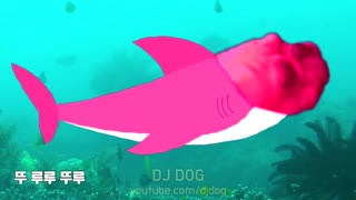 Dog shark 🦈