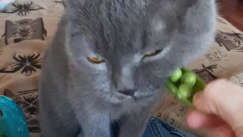 my cat is a vegetarian