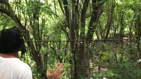 scare wilde monkeys with mask