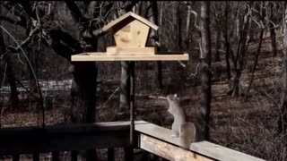 Animals Getting Shocked !!