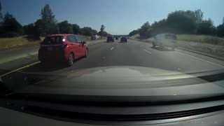 Family of Ducks Play Chicken on Freeway