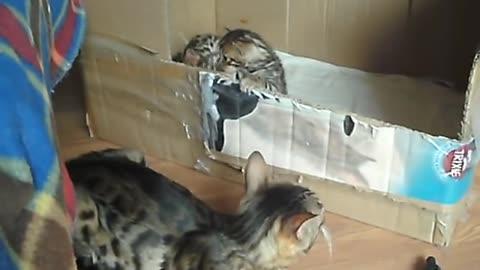 Mother talks to kitten.