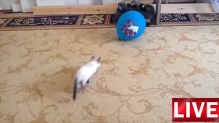Kat x Balloon