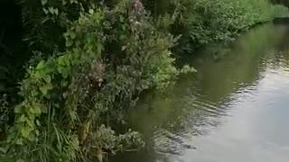 nature in botanical garden Germany- Hamburg