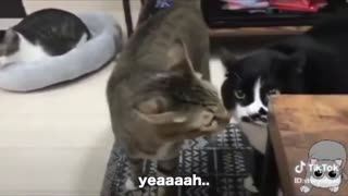 Cats talking english??????????????