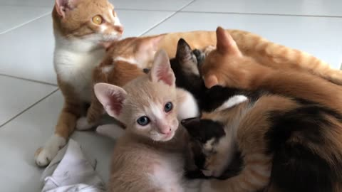 Five cute kittens rescued from the streets