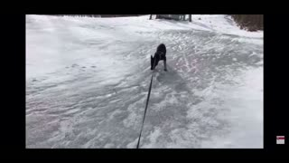 German Shepherd Puppy Experiences Snow for the First Time