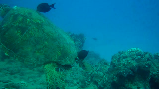 Diving at Turtle Canyon