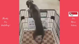 Wonderful Funny Dog Videos