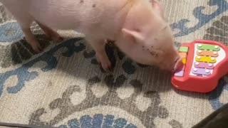 That Pig's Got Talent