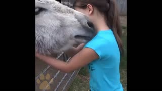 Animals do not forget their owners