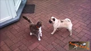 Cats and Dogs Meeting Each other For The First Time!