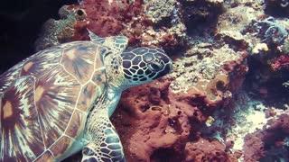Turtle Underwater!!