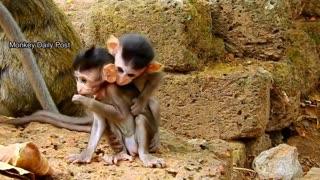 Epic fail baby monkeys