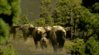 TOP 10 Largest Animals in History