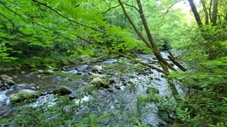 Smoky Mountain hiking