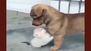 The cat wants to make friends with the dog