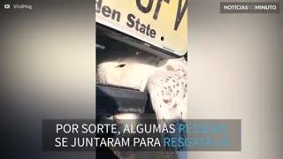 Coruja presa em para-choque de carro é resgatada