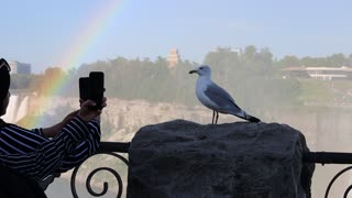 Niagra falls seagull picture taken in style without fear