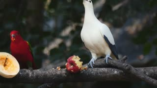 Birds Eating Fruits On a Tree - With great music