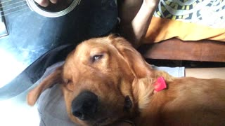 Adorable Dog Gets Drowsy to Guitar Serenade