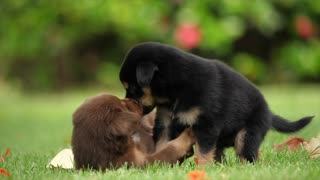 Puppies Dogs Friendship Full HD