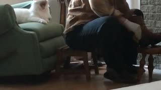 Cute Adopted Cat Asks For Attention