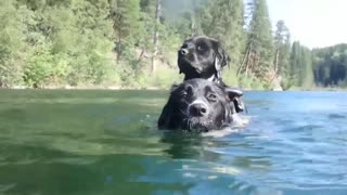 Try Not To Laugh At This Ultimate Funny Dog Video Compilation: Funny Pet Videos
