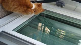 Strange cat by the sliding door