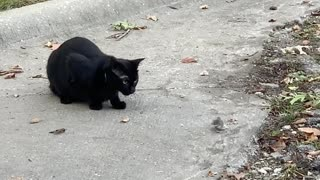A Real Life Tom and Jerry Scene between Cat and Mouse