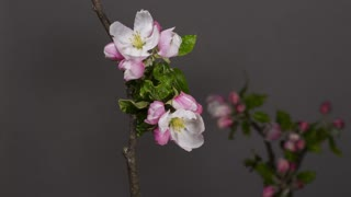 Time-Lapse Watch Flowers Bloom Before Your Eyes