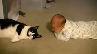 The first time cat meets babies