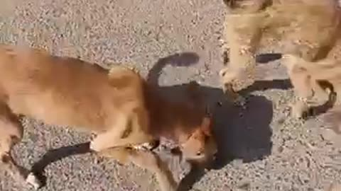 Watch small dogs while eating lovely animals 🐕