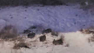 Wild Rabbit Winter Journey Day 6 Part 3