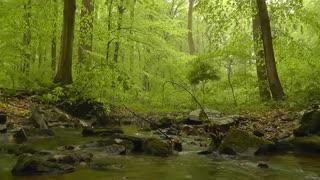 Peaceful Country Creek