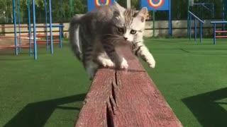 Naughty cute kitten