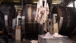 Learn Modern Cowhide Processing