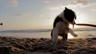 Puppy Playing On the Beach - Funny